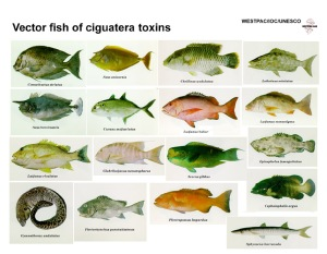 cfp_vectorfish[1]